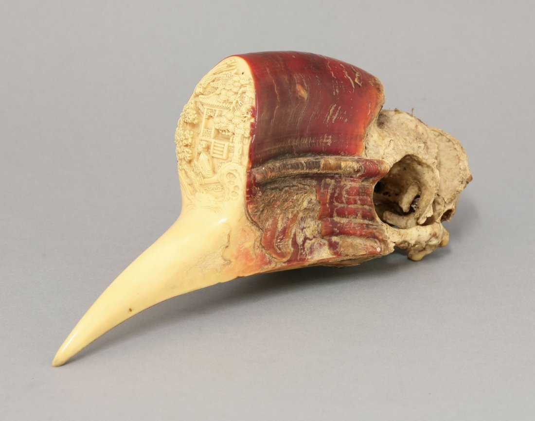 A rare hornbill Carving, early 19th century, the skull