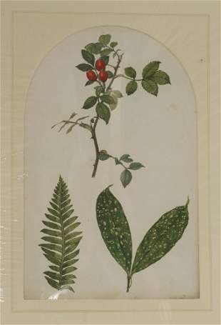 A quantity of original botanical studies in