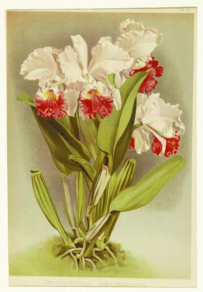 9: [Botany]. Group of 7 color lithographs.