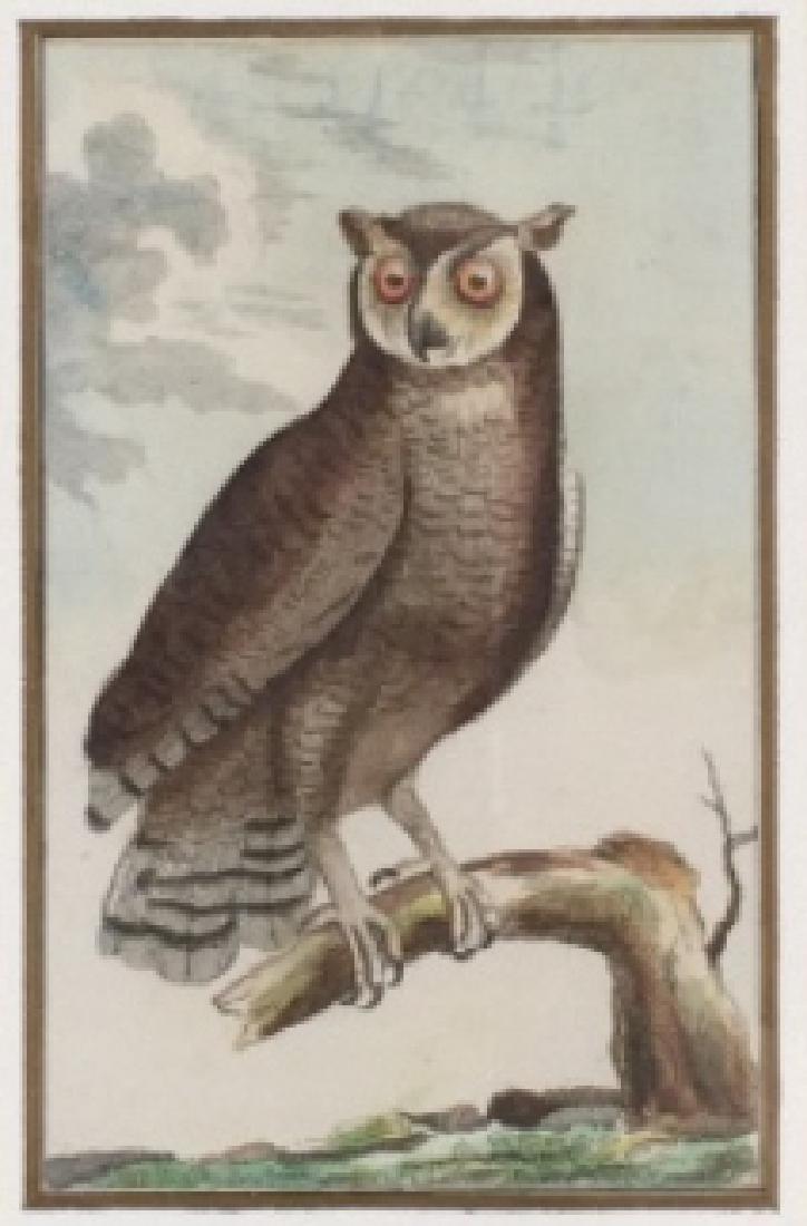4 Buffon Owl Studies. Naturgeschichte der Vögel.