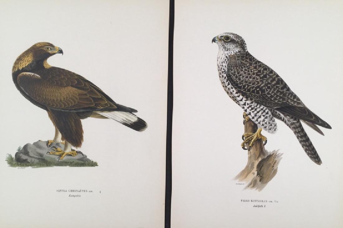 Magnus Von Wright. 48 Bird Chromolithographs.