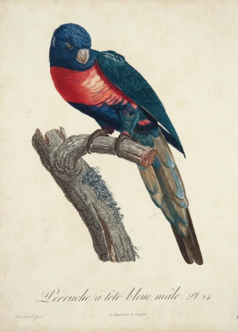 Jacques Barraband. 3 Studies of Parrots. 1808-1805