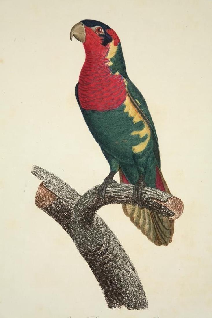 Barraband, 4 plates, 2 barbets, 2 parrots
