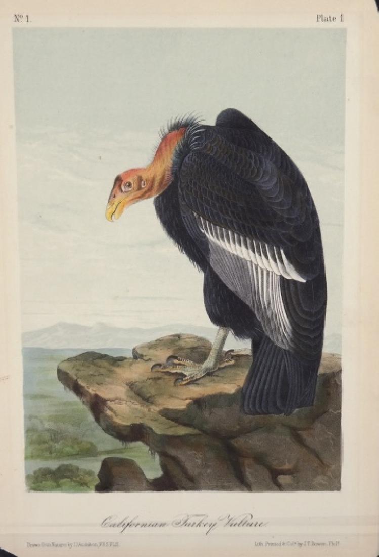 Audubon. 25 plates, Royal Octavo Edition.