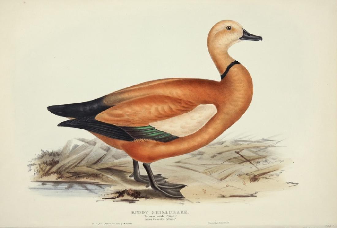 J.& E. Gould, 8 plates, Birds of Europe. 1832-37.
