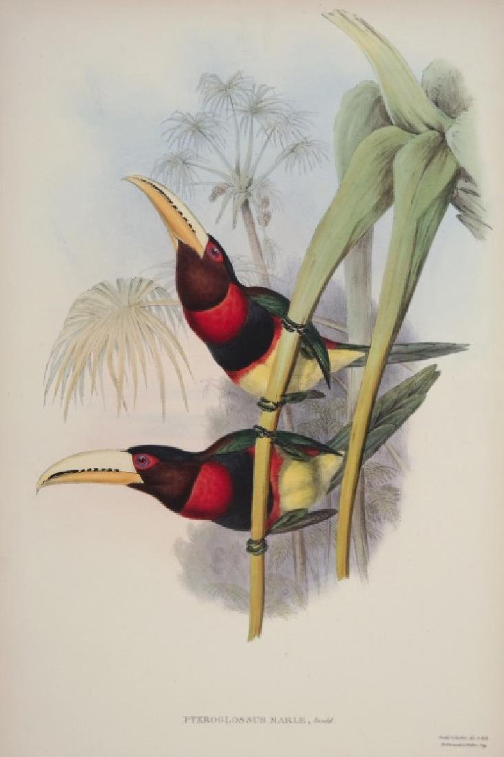 John Gould. 10 plates from Birds of Asia. 1850-83.