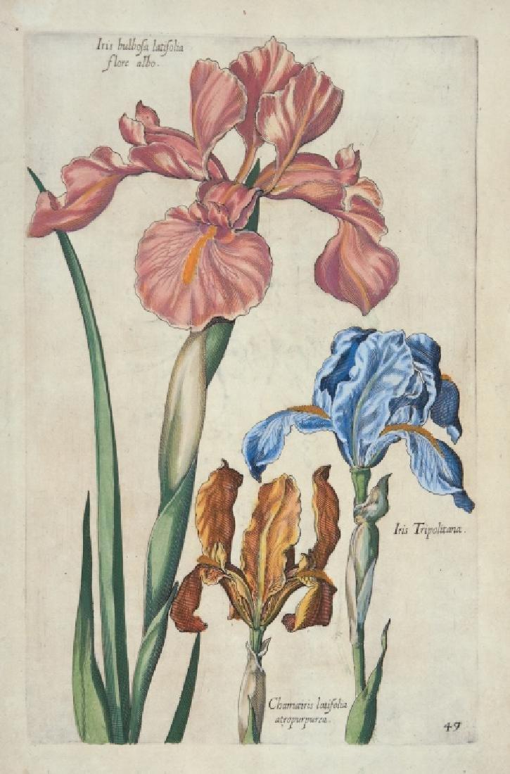 Johann Theodor de Bry. 5 Botanical Plates. 1770.