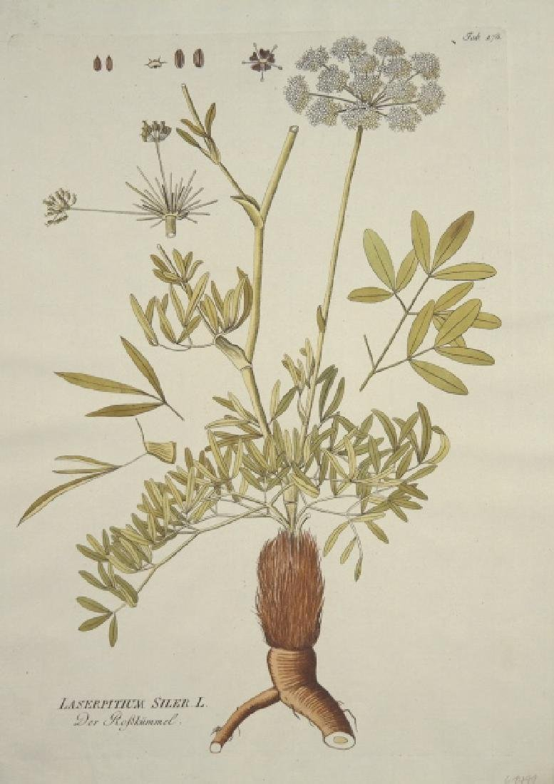 Joseph Jakob von Plenck. 6 Botanicals. c.1789.