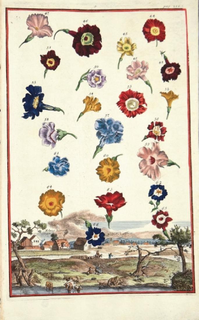 Johann Christoph Volckamer. Flowers. 1708.