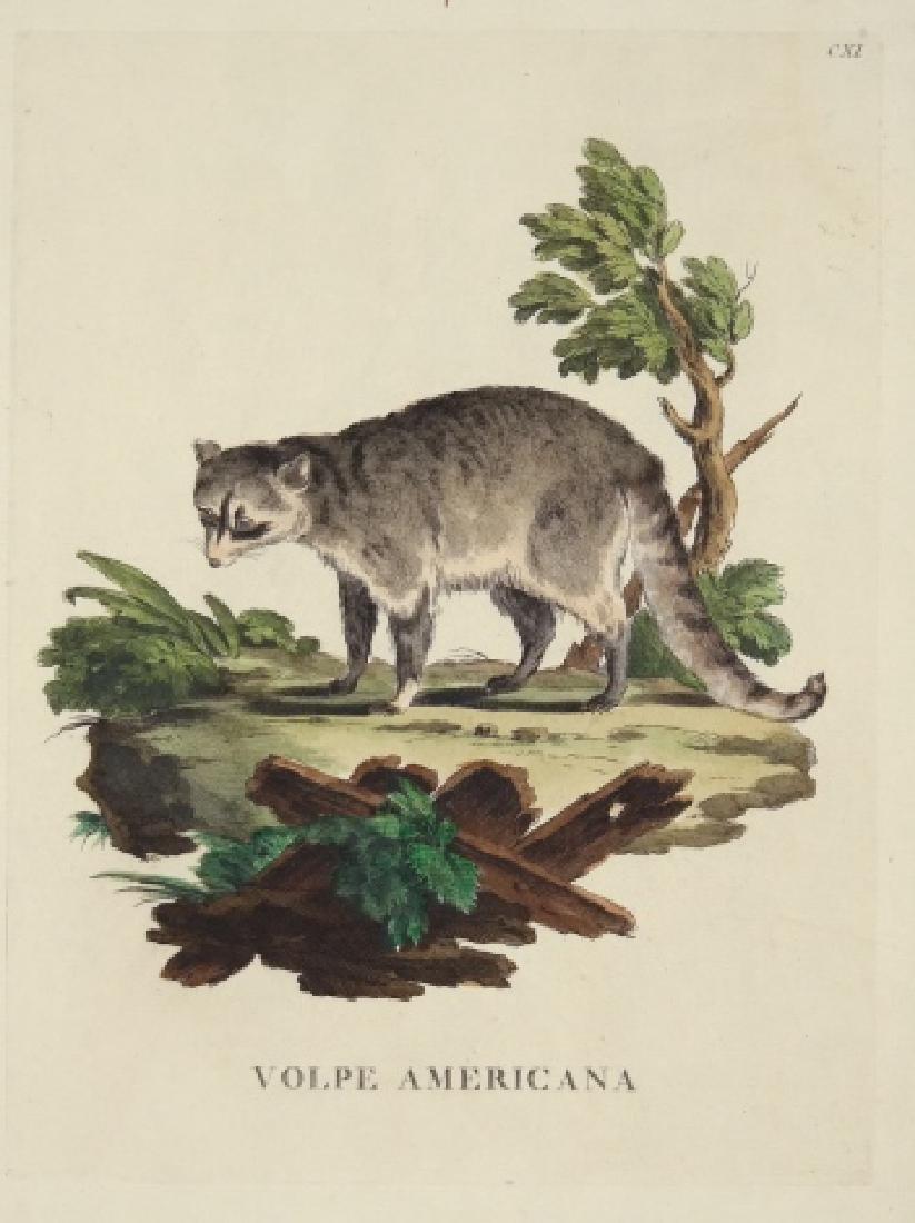 Innocente Alessandri. 5 Animali Engravings. 1772.