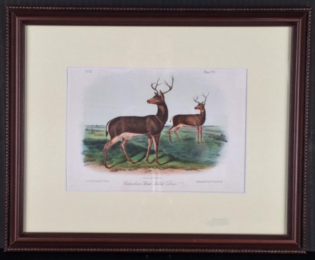 John James Audubon. 4 Octavo Animal Prints.