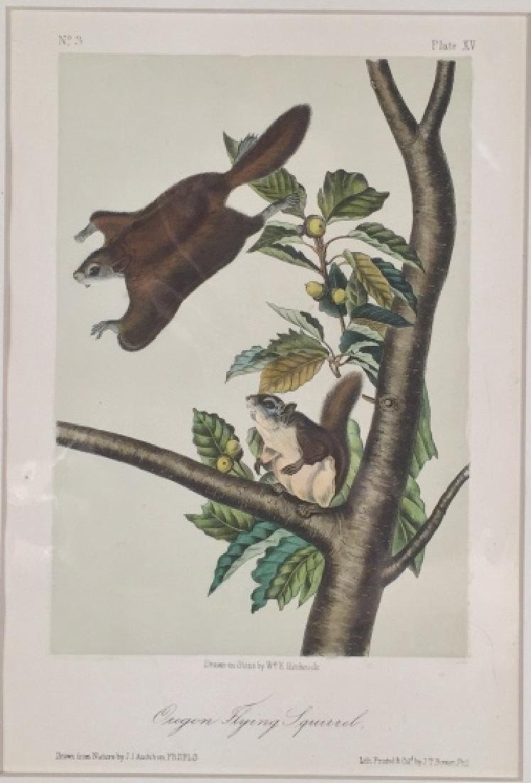 John James Audubon. 7 Octavo Animal Prints.