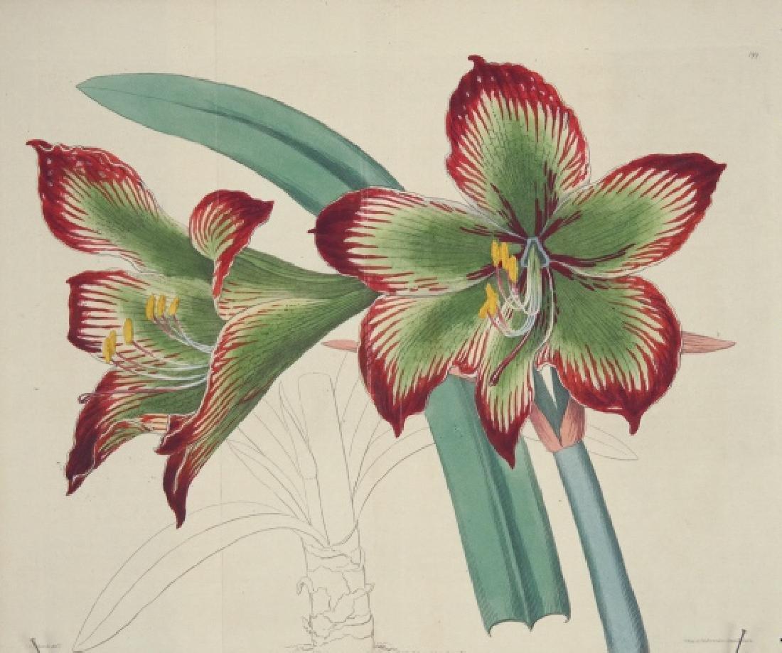Sydenham Edwards's Botanical Register. 7 Plates.