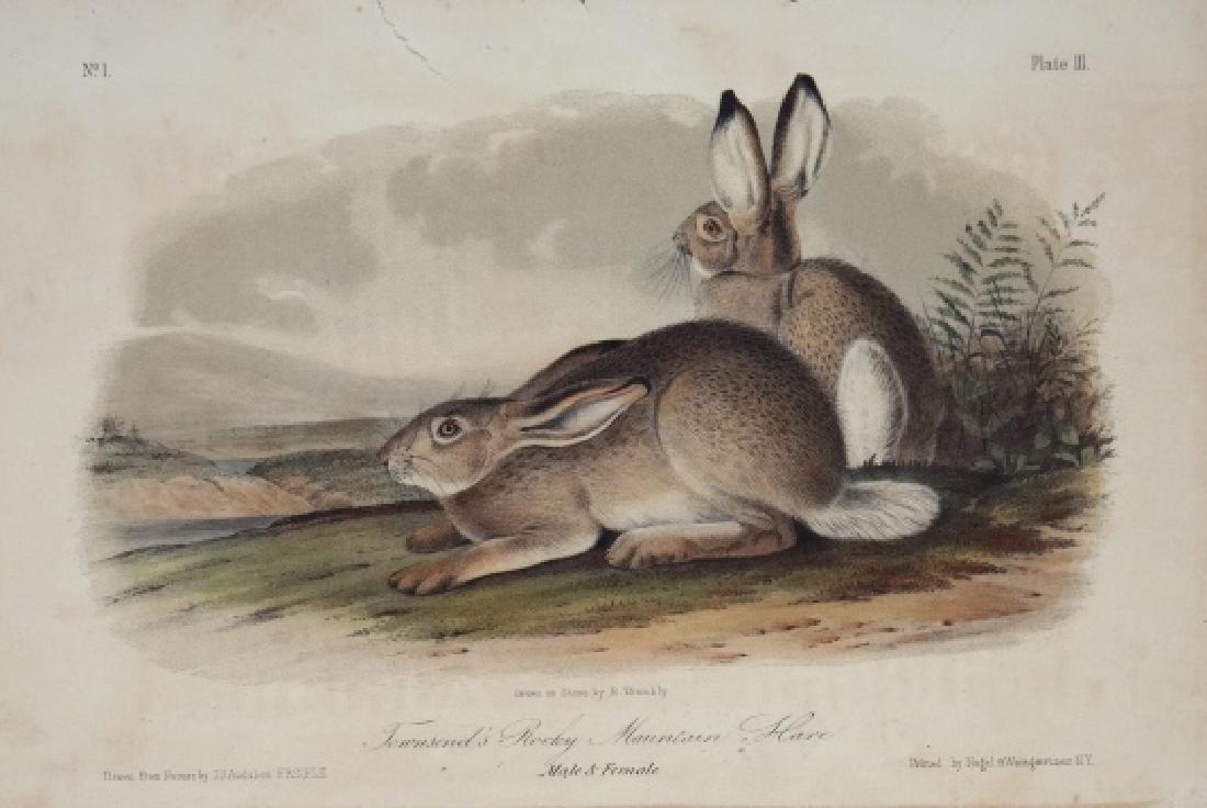 John James Audubon. 4 Octavo Plates. 1854.
