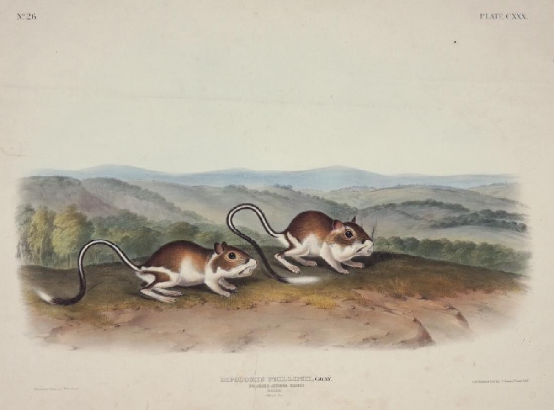 2 John James Audubon Imperial Folio Plates
