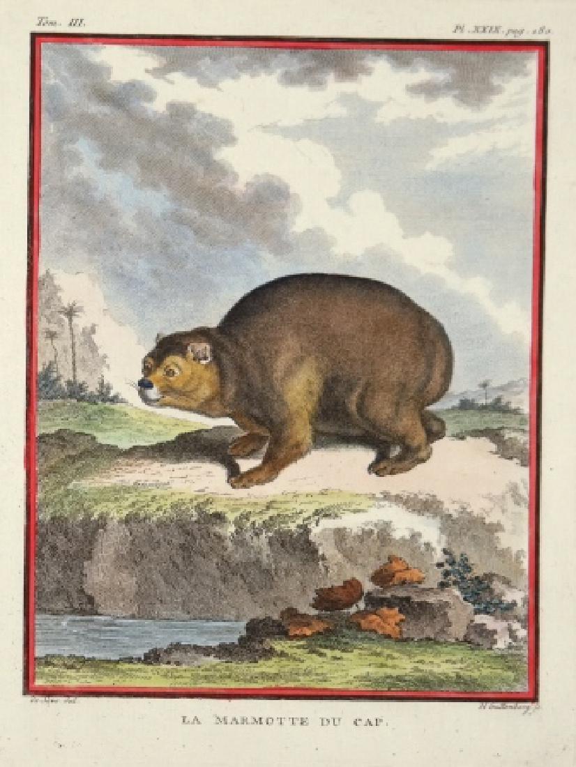 5 Buffon Mammal Plates. Histoire Naturelle.