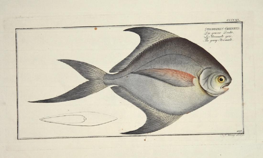Marcus Elieser Bloch. 6 Ichthyology Plates. c.1780
