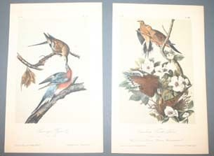 5: 10 Audubon bird prints from ''Birds of America.''