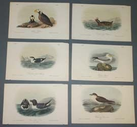 6: Audubon prints: BIRDS OF AMERICA, aquatic birds