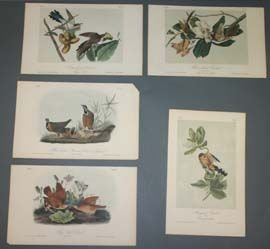 10: 10 colored Audubon bird prints: Near fine cond.
