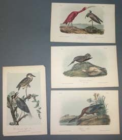 12: 10 Audubon bird prints: Sandpipers, etc.