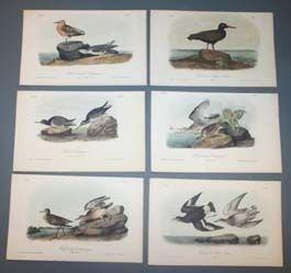 14: 10 Audubon bird prints: Whooping crane, sandpipers