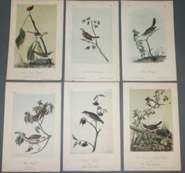 16: 10 Audubon prints: BIRDS OF AMERICA.