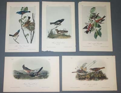 18: 10 color Audubon prints: finches, etc.