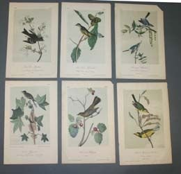 19: 10 prints after Audubon: BIRDS OF AMERICA.