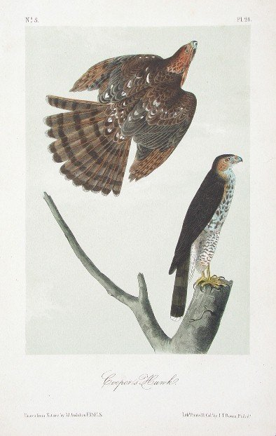 20: 10 Audubon prints: BIRDS OF AMERICA, 8vo ed.
