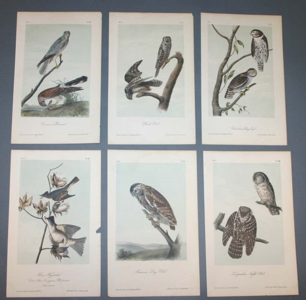 21: 10 prints after Audubon: BIRDS OF AMERICA.