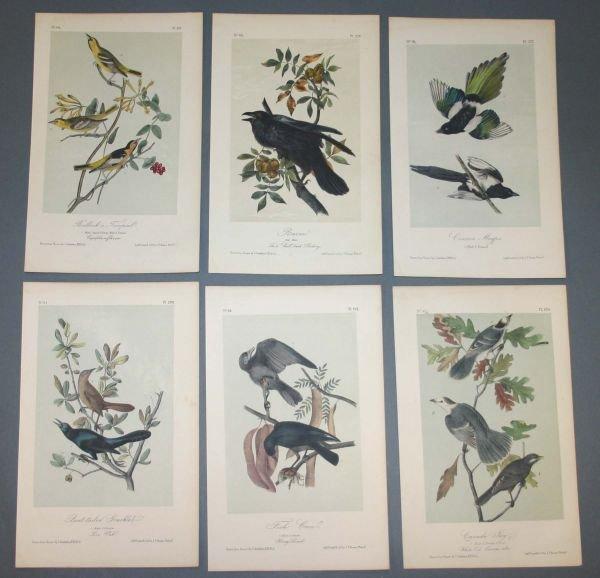 22: 10 Audubon prints: Jay, Shrike, Snowbird...