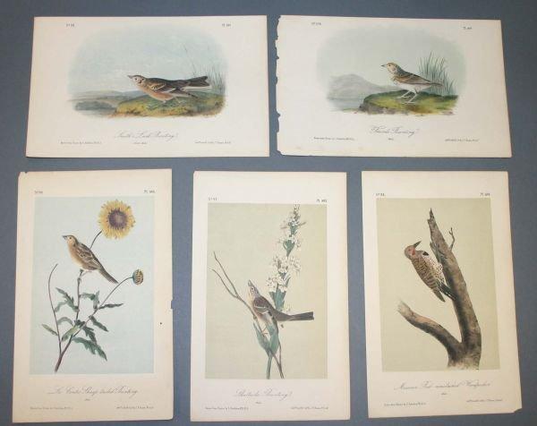 24: 5 Audubon birds: Plates from BIRDS OF AMERICA.
