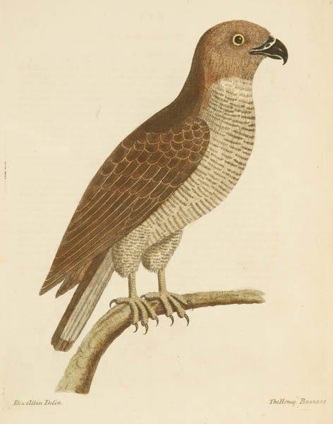 5: 8 plates, Eleazar Albin: 6 birds + 2 botanical.
