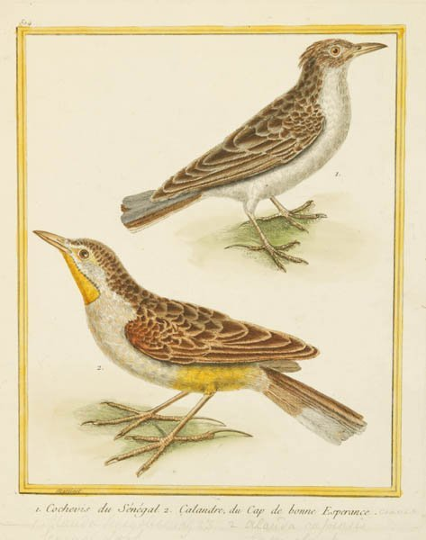 6: [Birds]. 6 hand-colored engravings by [F.N.] Martine