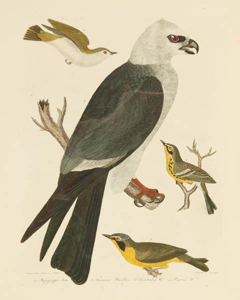 9: Alexander Wilson, 3 colored bird engravings
