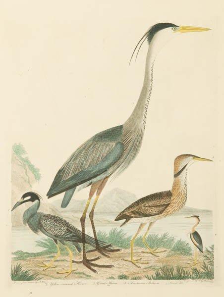 10: Alexander Wilson: 3 colored bird engravings