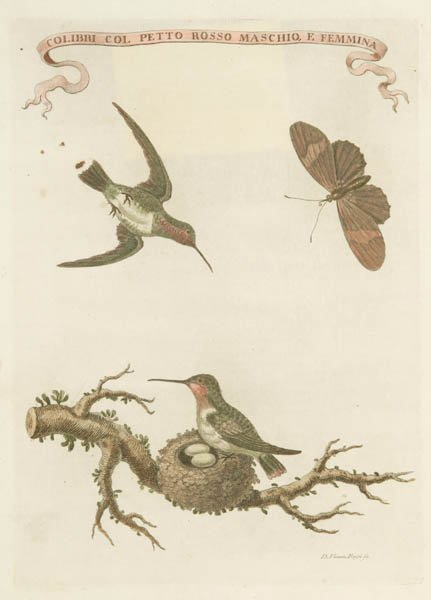 15: 6 hand-colored engravings-- George Edwards + Rossi