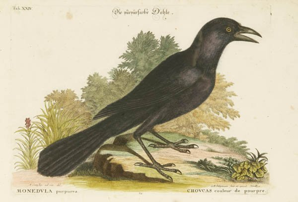 17: Catesby, Mark. 4 hand-colored prints