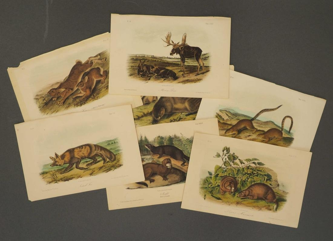 Audubon. Quadrupeds. 23 plates. Octavo Edition.
