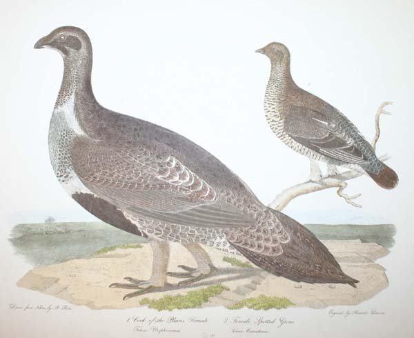 6: A. Wilson & Rider: 14 colored engravings of birds.