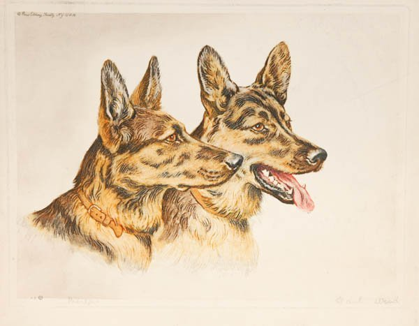 19: Paul Wood: 32 etchings of dogs