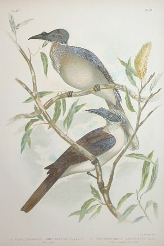 1002A: Broinowski, THE BIRDS OF AUSTRALIA, 36 plates.