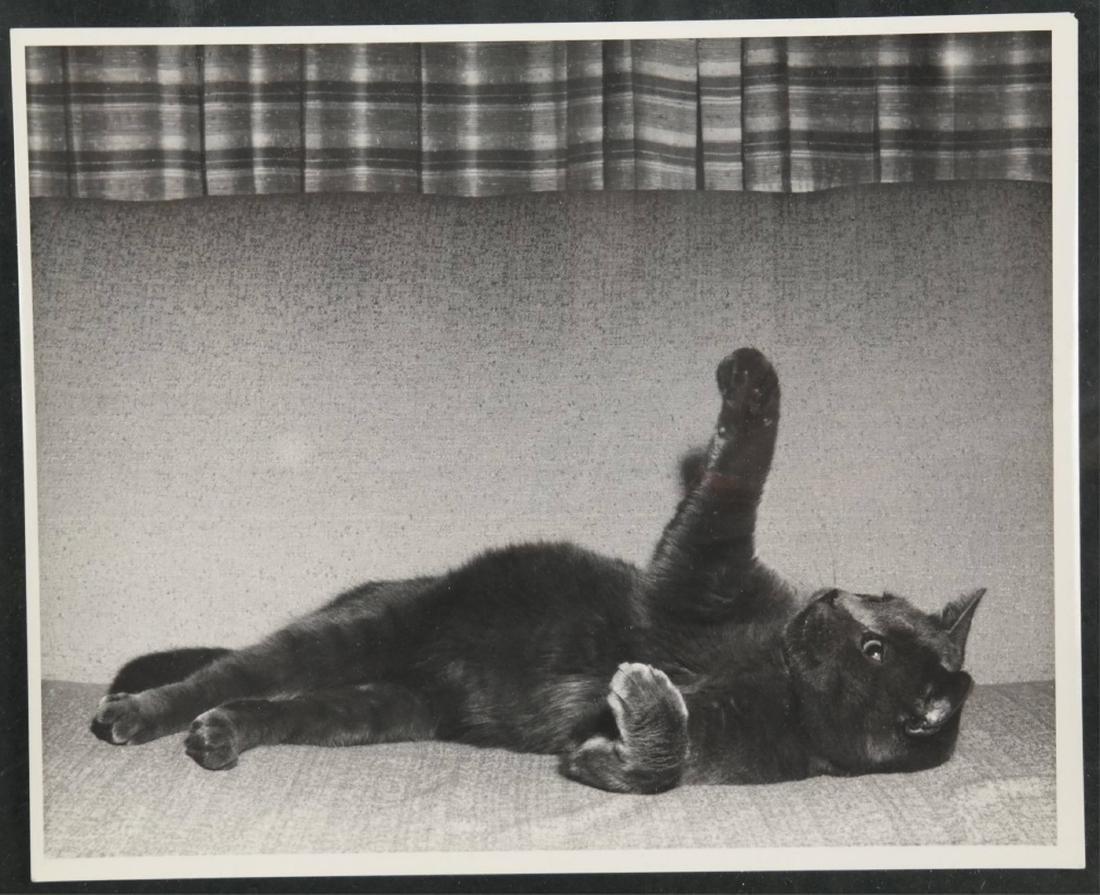 Group of 6 Tom Kitten Kennedy Photos. - 4