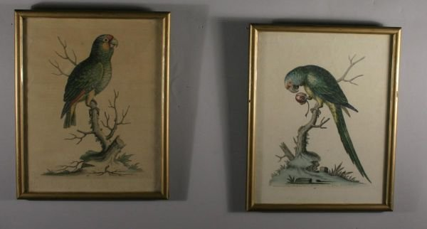 258: [Birds]. 2 Hand-Colored Engravings.