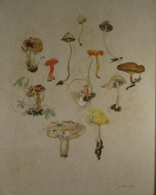 271: [Mushrooms]. McCaffery, Janet. Watercolor