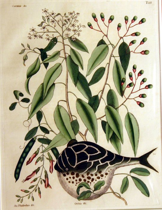 8: 11 natural history prints, 19th cent.
