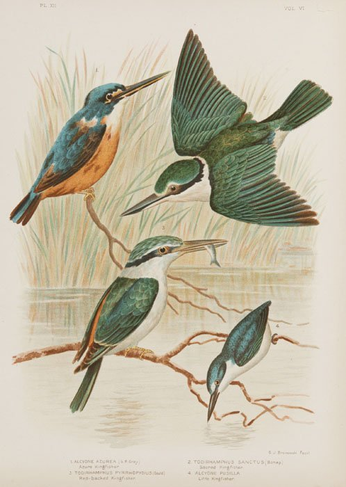 10: 27 color lithos from THE BIRDS OF AUSTRALIA, 1891.