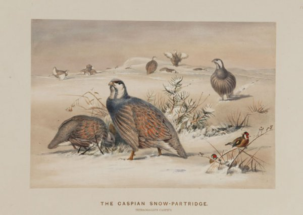 14: Birds: 9 Color Lithos. Josef Wolf, 1861-1867.