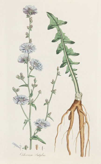 17: 15 hand-colored flowers, c.1800